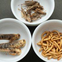 Por qué hay atletas que comen insectos para mejorar su rendimiento