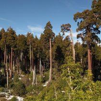 La conservación de los ecosistemas y su desvinculación de su entorno