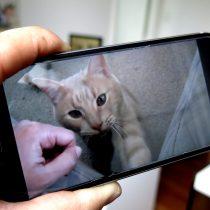 Las redes 5G no solamente transmitirán mejor los videos de gatos
