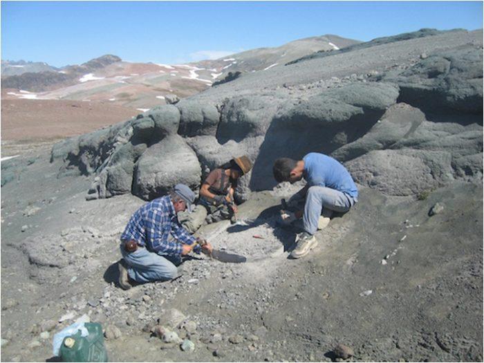 chilesuaurus yacimiento