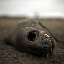 Chile país contaminado