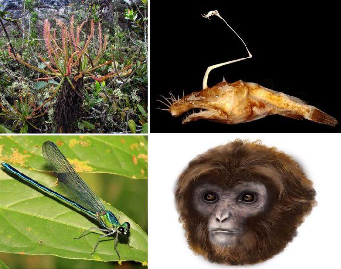 Planta descubierta en Facebook y una tortuga de Galápagos se suman al Top Ten