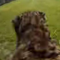 [VIDEO] La impresionante vista en primera persona de un guepardo corriendo