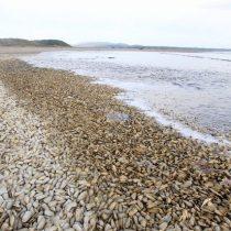 Microalga que produce marea roja aumenta su intensidad y extensión