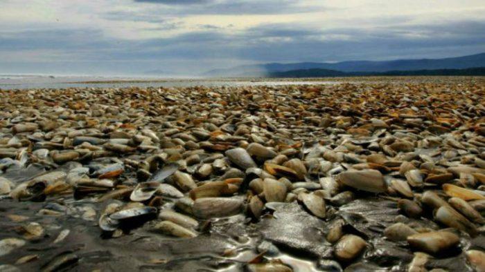 Oceanógrafos de la UV aseguran que marea roja estaría en declinación