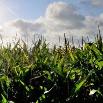Los abogados tras el acuerdo Monsanto-Bayer y las exigencias de la Fiscalía Nacional Económica