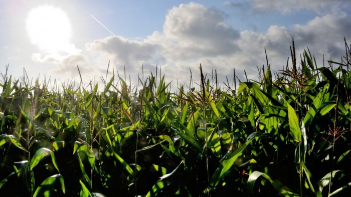 Monsanto atraviesa momentos clave ante juicios por cáncer