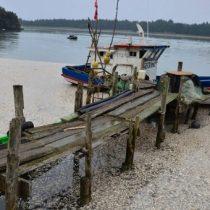 Presentan demanda en contra de Sernapesca, la Armada y salmoneras ante el Tribunal Ambiental de Valdivia