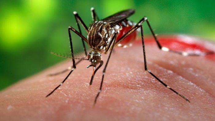 Confirman nuevo hallazgo de larva que transmite virus del Zika en Camarones