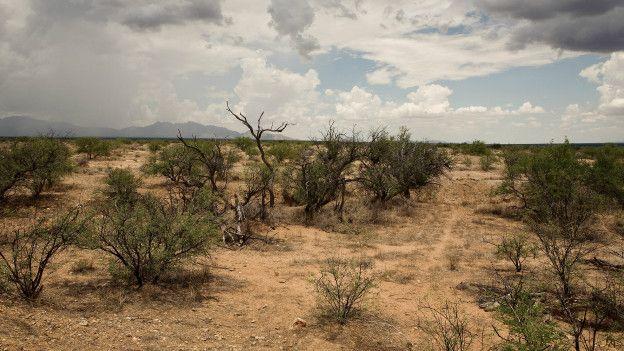 El desierto de Sonora es uno de los más grandes y calurosos del mundo.