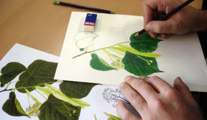 Curso de Ilustración Científica gratuito en sede San Fernando de UC del Maule, todos los martes de julio