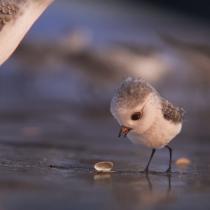 [VIDEO] El tierno primer adelanto del nuevo corto de Pixar que llegará a los cines junto a Buscando a Dory