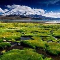 El capital natural: fundamental para la economía, esencial para la vida