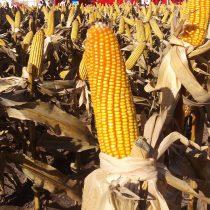EE.UU. se topa con efectos inesperados del uso de biocombustibles