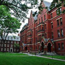Harvard estaría buscando vender activos forestales en Sudamérica