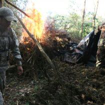 Operativo destruyó 70 toneladas de marihuana entre Brasil y Paraguay