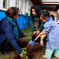 Conaf Isla de Pascua entrega a la comunidad más de siete mil árboles para combatir la erosión