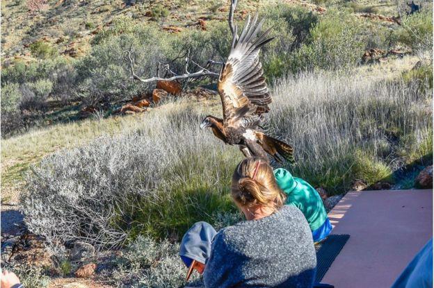 Los representantes de Alice Springs Desert Park informaron que están investigando lo ocurrido y que apartaron al ave de los espectáculos.