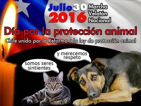 Convocan a marchas y velatón en todo Chile para celebrar este sábado el Día de la Protección Animal