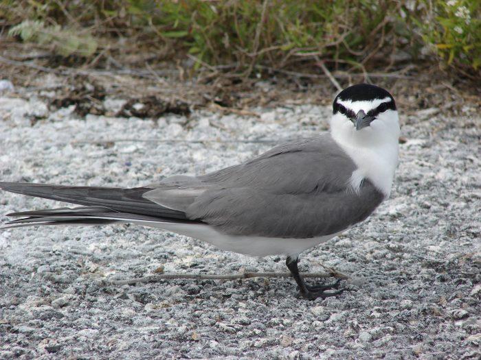 Una charla a escolares de Rapa Nui para incentivar la protección de las aves polinésicas