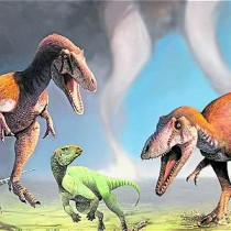 [VIDEO] Descubren nueva especie de dinosaurio carnívoro en Argentina