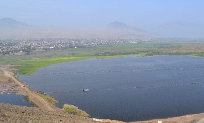 """Científico """"resucitó"""" humedal en 15 días y ahora va por el Titicaca"""