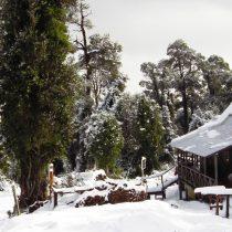 La Posada de El Taique: La defensa selvática de una familia en medio del bosque