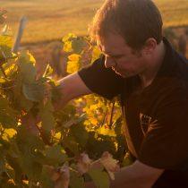 La suma de factores que permiten a Tamaya producir vinos premium de categoría mundial
