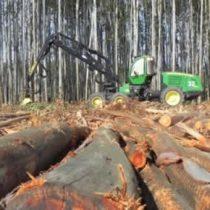 Presentan nueva evidencia del impacto negativo de la industria forestal en Chile