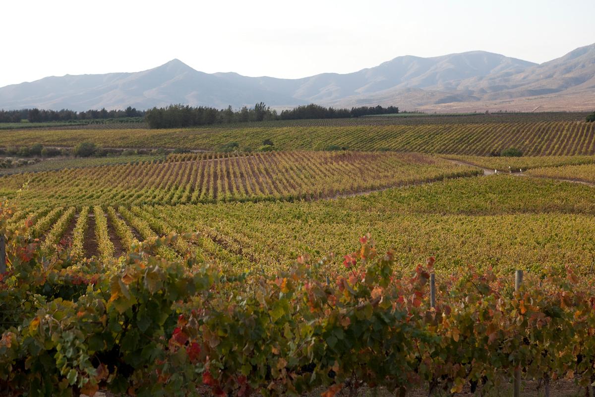 valle-limari-quebrada-seca