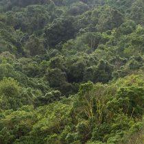 Bosques y la ecuación para la carbono neutralidad