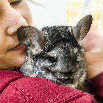 Animal Libre, la ONG que salió al rescate de las chinchillas