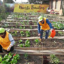 Vecinos de Estación Central realizan primera cosecha en  huerto familiar urbano