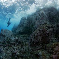 Chile firma decreto que crea parque marino de 297.000 kilómetros cuadrados