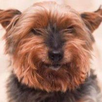 La trágica y violenta muerte de Jack, el perro más viejo de Inglaterra