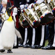 [VIDEO] Nils Olav: el pingüino que llegó a ser coronel
