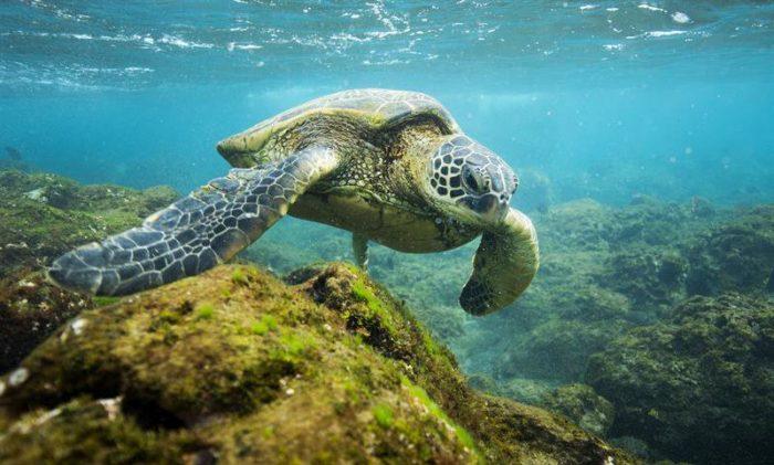 Obama establece en Hawai la mayor área protegida del mundo