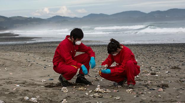 Greenpeace atribuye responsabilidad al Gobierno por vertimiento de salmones en Chiloé