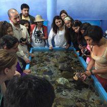 Curso gratuito de educación marina para profesores en Estación de Investigaciones Marinas UC, inscripciones hasta 28 de septiembre