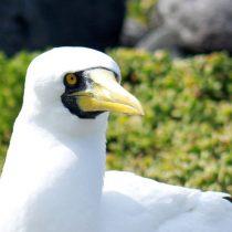 Isla Salas y Gómez: el santuario de aves ligado estrechamente a Rapa Nui