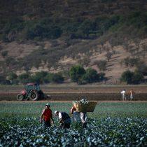 Gobierno decreta zona de emergencia agrícola en 17 comunas de la Región Metropolitana