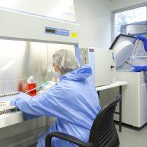 Mitos y verdades de las células madre