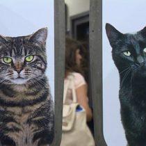 [VIDEO VIDA] La estación de metro de Londres invadida por decenas de gatos