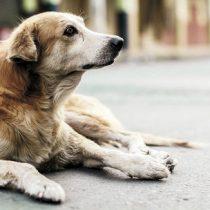 Corte de Apelaciones ordenó retirar a perros callejeros en Coyhaique