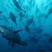 La contaminación por nutrientes está cambiando el sonido de los océanos