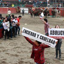 Animalistas harán banderazo en Santiago para exigir fin del rodeo