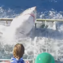 [VIDEO] La milagrosa escapada de un buzo al ataque de un tiburón blanco