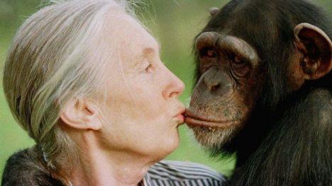 La inglesa Jane Goodall es mundialmente reconocida por sus investigaciones con chimpancés, con los cuales convivió por unas tres décadas.