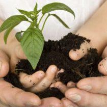 Cómo disminuir la huella de carbono en el hogar