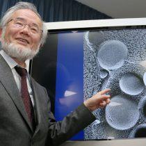 Ohsumi, el biólogo que halló en la levadura pistas contra el Alzheimer